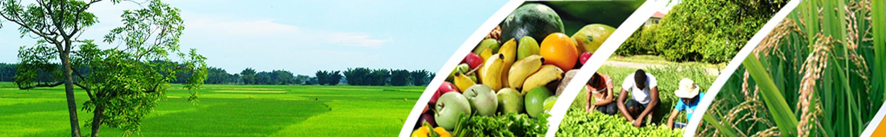 राष्ट्रीय कृषि विकास योजना (रफ़्तार